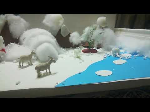 Project polar region