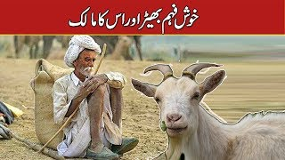 Illusions Goat And Her Owner خوش فہم بھیڑ Urdu Moral Story Urdu/Hindi