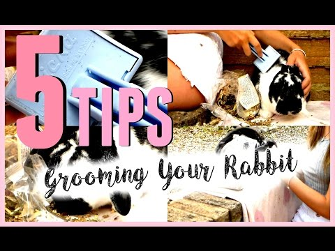 5 TIPS On Grooming Your Rabbit! | RosieBunneh
