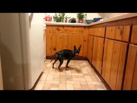 Dog eats edible