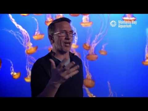 Chef Rick Moonen On the Importance of Choosing Sustainable Seafood