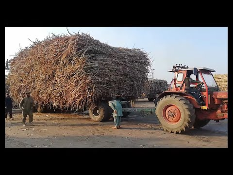 belarus 510 Pulling And Unload Sugarcane with Unloading Hydraulic System