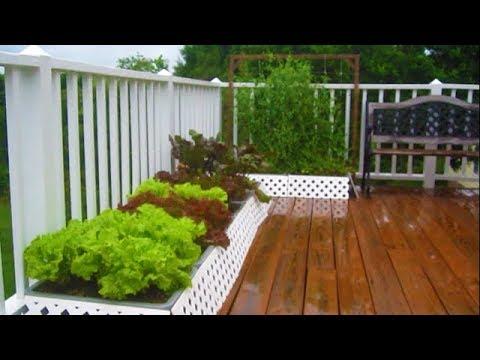 June 12th Container GARDEN UPDATE walkthru tour Organic Vegetable Gardening how to plant