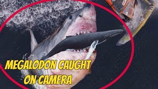 megalodon+shark+still+exists Videos - 9tube tv