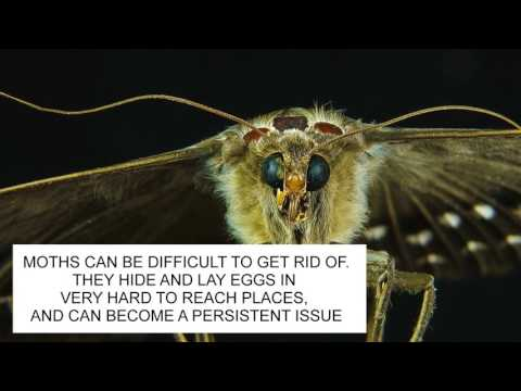 HOW TO GET RID OF MOTHS & MOTH PREVENTION UK  ~ CATCH-IT LTD PEST CONTROL LONDON