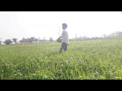 Xxx Mp4 Emiway New Video Cover Song Bhojpuri Bk 3gp Sex