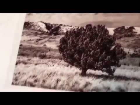 Alternative process photography - Anthotype Tutorial