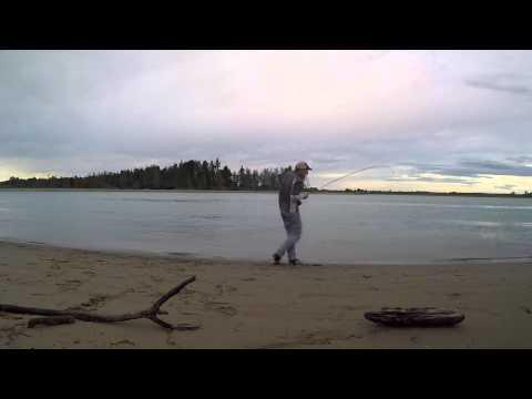 Fly Fishing For Kahawai | New Zealand