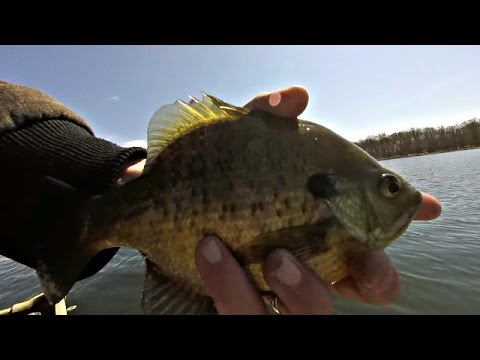 3/28/2016 Early Spring Crappie & Bluegill Panfish Fishing w/ MN Metro Fishing Report by iFishMN