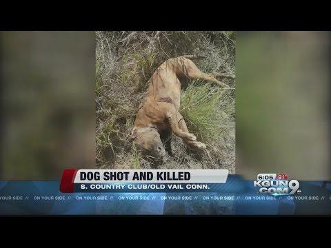 Volunteers find dead dog with multiple gunshot wounds, dumped in desert