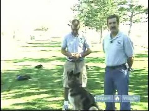 How to Train a Drug Dog : Untrained Drug Dog Demonstration