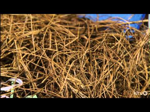 Flies in compost pile|John Dromgoole|Central Texas Gardener