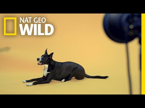See How Our Photographers Captured the Pets of Nat Geo | Nat Geo Wild