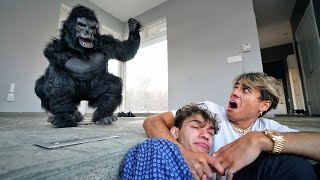 ANGRY GORILLA BREAKS INTO OUR HOUSE!
