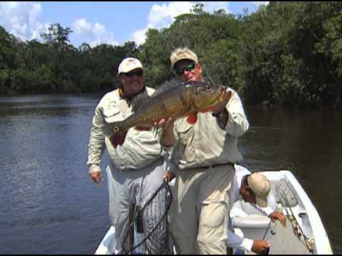 Amazon Fishing for Peacock Bass on the Rio Negro River Brazil