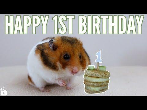 HAPPY 1ST BIRTHDAY BASIL 🎂