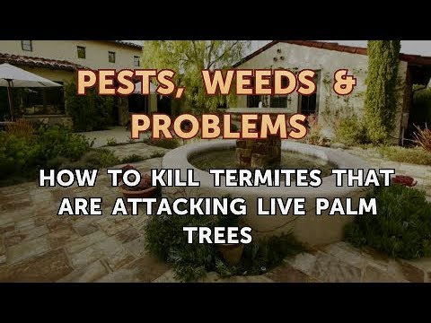 How to Kill Termites That Are Attacking Live Palm Trees