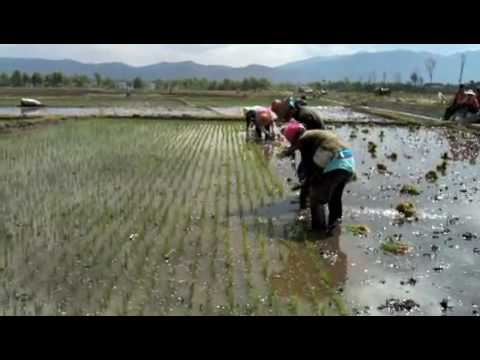 15 Seconds In China - Rice Paddy