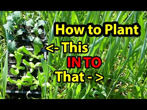 True NO Till Gardening - Growing ( Building ) Soil for Homesteading Vegetables for beginners 101. #1