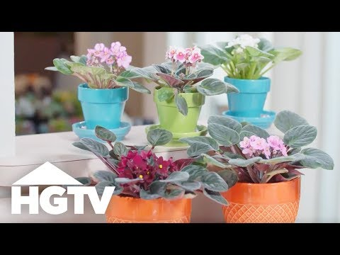 How to Care for African Violets - Way to Grow - HGTV
