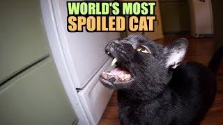 Talking Kitty Cat - World