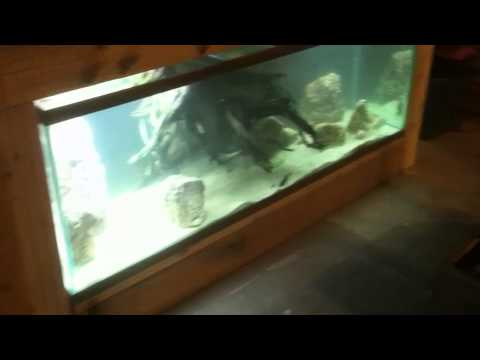 180 GALLON BUILT IN AQUARIUM FISH TANK BUILD