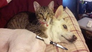 IF YOU LAUGH YOU LOSE CHALLENGE - Cats & Dogs - Who is the funniest to you?