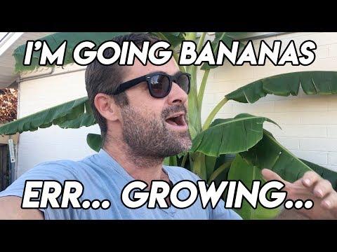 Ep168 - I'm Going Bananas... Errr, Growing...