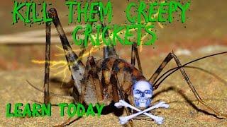 Kill Them Creepy Basement Crickets Now