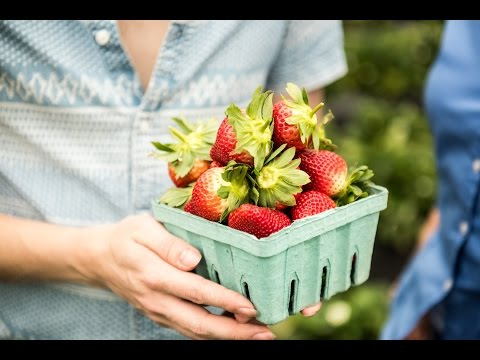 Tips for Picking Fresh Strawberries from the Field