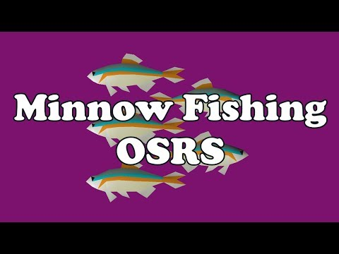 OSRS Minnow Fishing - The Supreme Method for Sharks