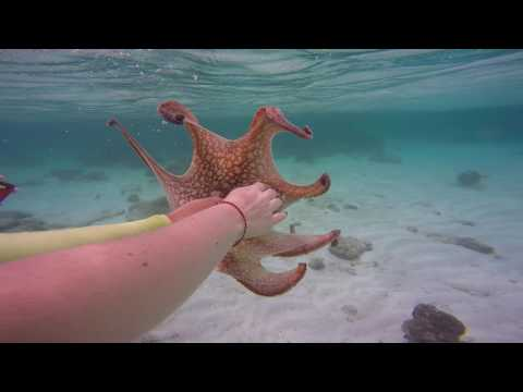 Snorkeling in Aruba - Octopus ink SPLASH