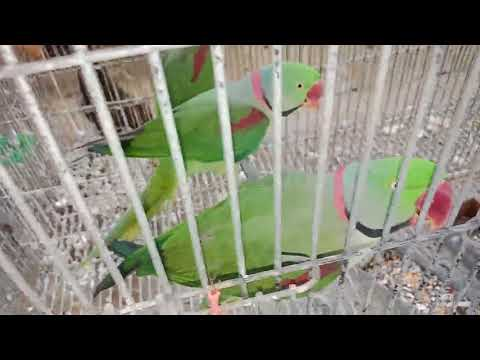 ||Paradise birds information || Setup visit - youtube