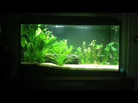25 gallon planted aquarium NEW SETUP!
