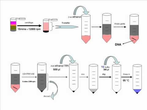 DNA isolation from blood with TKM method