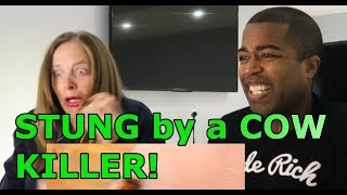 Download STUNG by a COW KILLER! (REACTION🔥) Video