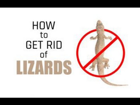 How to Get Rid of Lizards Permanently