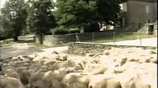 Queijo Roquefort - Reportagem Globo Rural