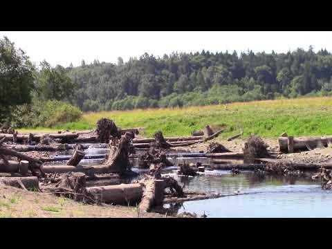 Skagit Environmental Wetland Mitigation Bank
