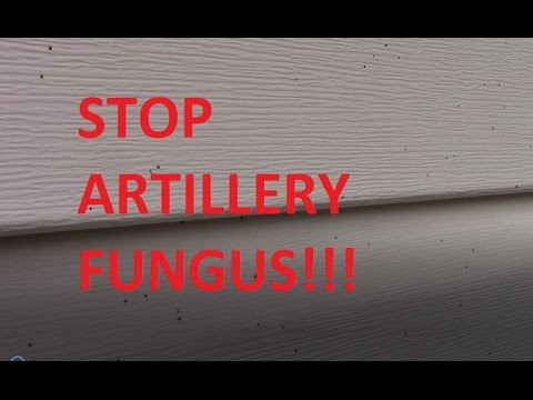 How to STOP Shotgun Mold Fungus Artillery Mold in your MULCH