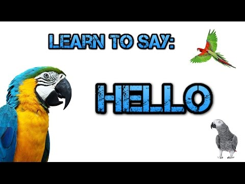 Teach your Parrot to say Hello! - Parrot Talk