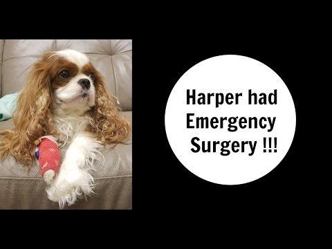 HARPER HAD EMERGENCY SURGERY