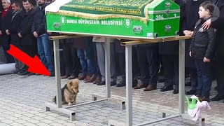 The dog came to his owner's funeral - What happened next amazed everyone!
