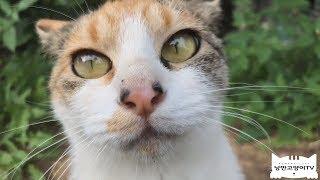 길고양이 2마리 포획 했습니다,겁이 많아서 죄송합니다I caught two stray cats(TNR).