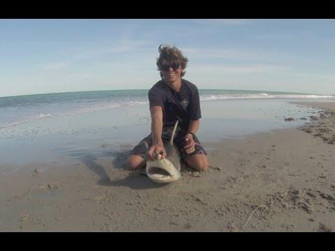 Surf Fishing for BIG Sharks in Vero Beach, FL