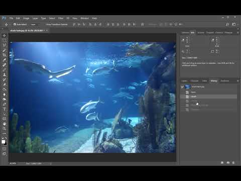 Photoshop CC - Levels, Curves, Brightness/Contrast, Exposure, Hue/Saturation, Color Balance