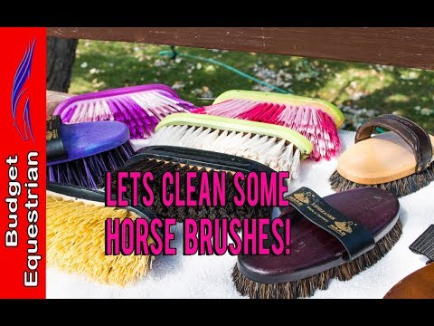 How To Clean Your Horse Brushes - So Easy!