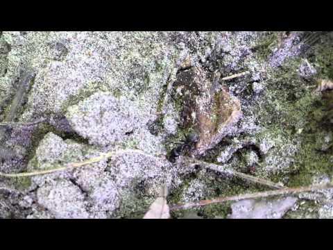 Carpenter Ant at Black Creek - Mutant?