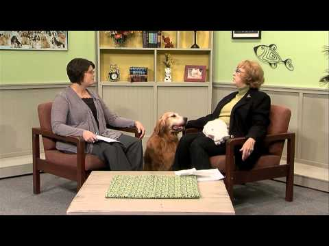 The Paw Report 110: Choosing the Perfect Puppy