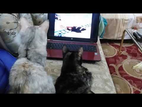 Tom and Jerry watching Tom and Jerry ft Tom and Jerry !!! Must Watch !!!